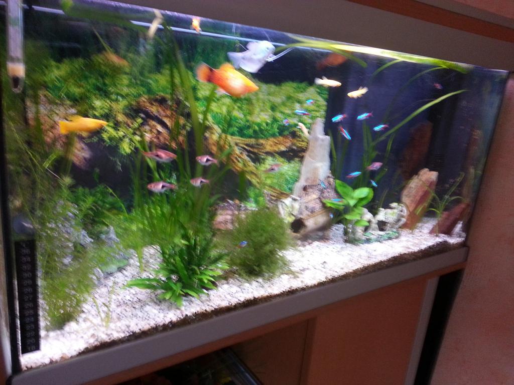 Мой аквариум как сделать воду прозрачной 104