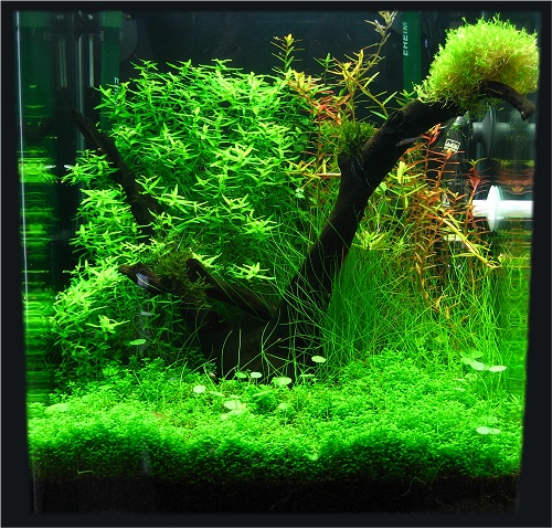 Aquarium eau douce 30l