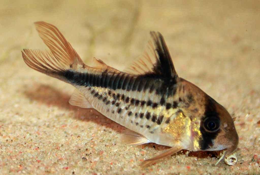 Base de donnees especes poissons crevettes et mollusques eau douce ...